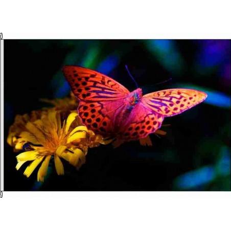 So-Schmetterling