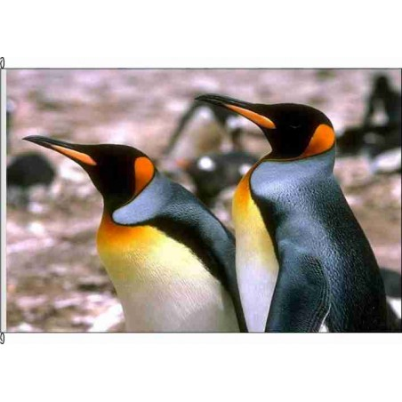 So-Pinguine